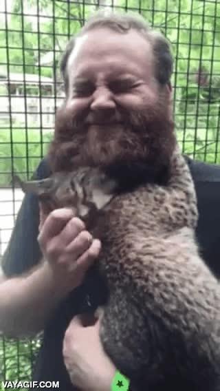 Enlace a ¿Para qué sirve una barba? Para que los cachorros de lince te quieran mucho más