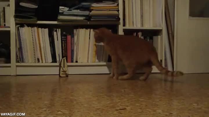 Enlace a Creo que alguien le instaló a este gato un metrónomo en su interior