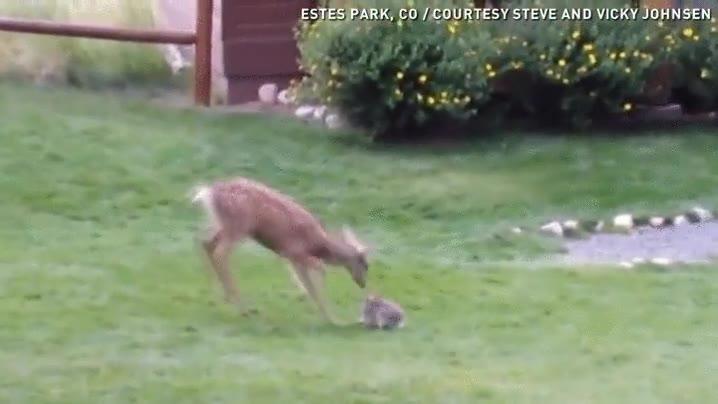 Enlace a Primer cásting para la película live action de Bambi