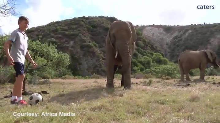 Enlace a Elefantes jugando a fútbol con unos niños