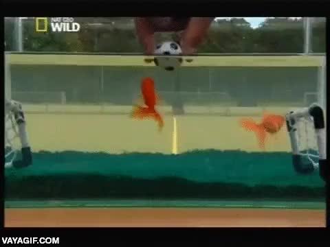 Enlace a Fútbol subacuático