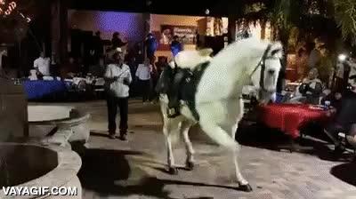 Enlace a Este si es un caballo con mejores pasos de baile que tú