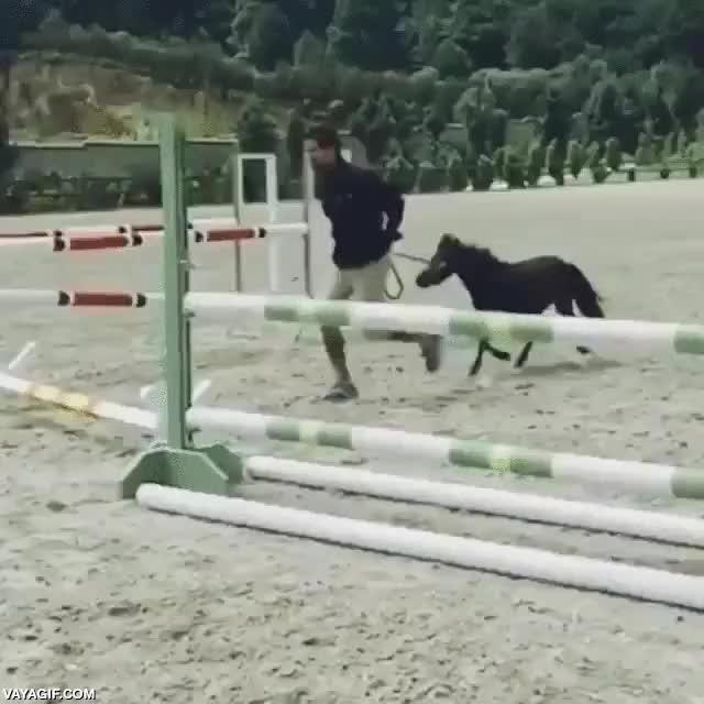Enlace a El caballo más pequeño que he visto dando el salto más adorable