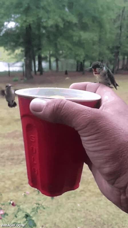 Enlace a Compartiendo un trago con mis pequeños amigos, los colibrís
