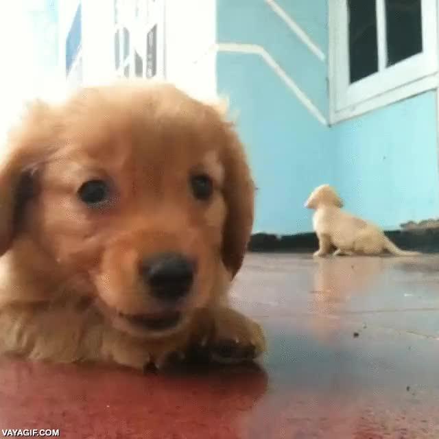Enlace a ¡No, no mires al otro, yo soy el más adorable, grábame solo a mí!