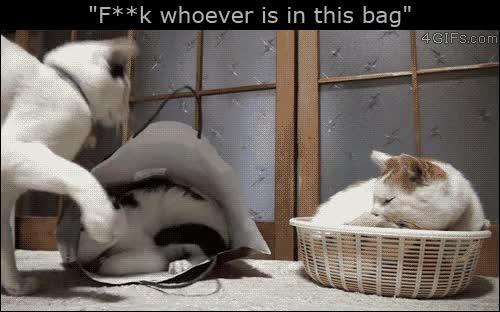 Enlace a No sé quién hay dentro de esta bolsa, pero esto es para ti, porque sí