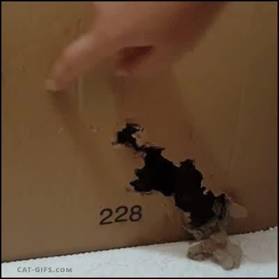 Enlace a El gato de Schrödinger está vivo y tiene sed de venganza