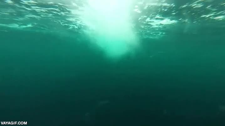 Enlace a Esta es la velocidad de una orca a mar abierto, da miedo