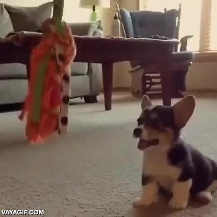 Enlace a Torpeza adorable perruna