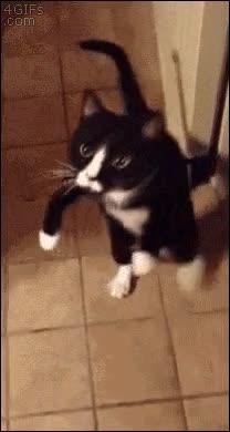Enlace a El gato zombie