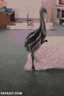 Enlace a Así serían los emús si tuvieran brazos