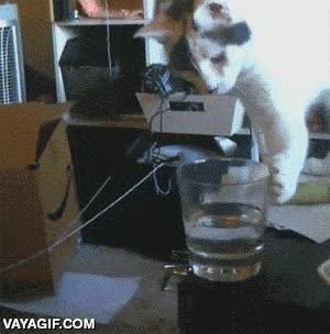 Enlace a Un gato no se preocupa por si el vaso está medio lleno o medio vacío