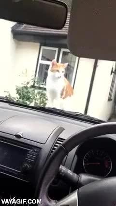 Enlace a Trolleando a un gato con el claxon del coche