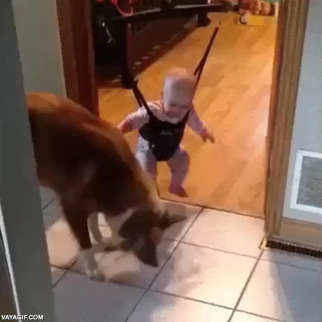Enlace a ¡Mira pequeño humano, yo te enseño a saltar, haz como yo!
