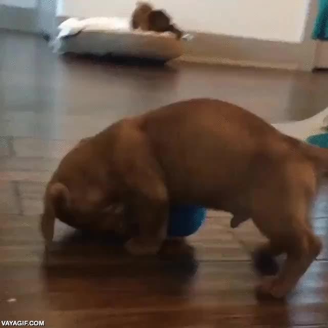 Enlace a Este perro es tan pequeño que hasta una pelota de tenis le va grande