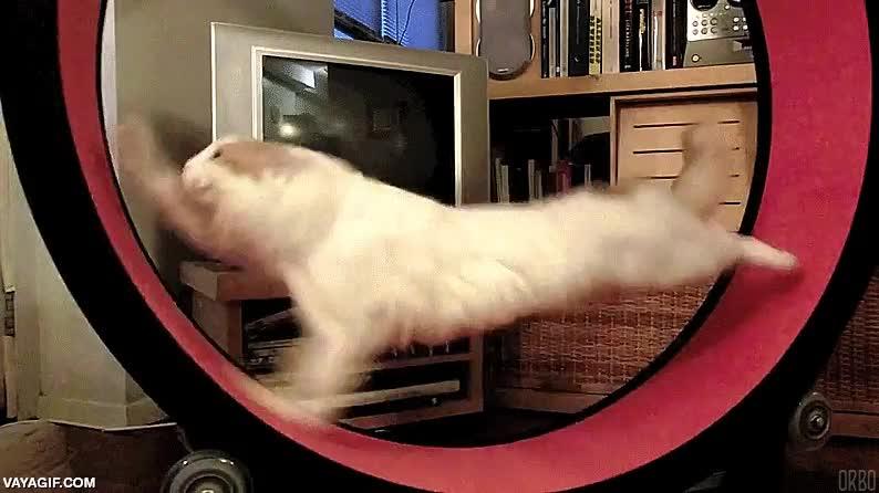 Enlace a Para los que dicen que los gatos solo son animales vagos que nunca hacen ejercicio