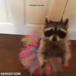 Enlace a El mapache que solo quería bailar