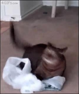 Enlace a Cuando le das 'catnip' a tu gato pueden pasar cosas como estas