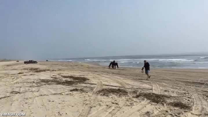 Enlace a Dos potros salvajes jugando en la playa como dos niños pequeños