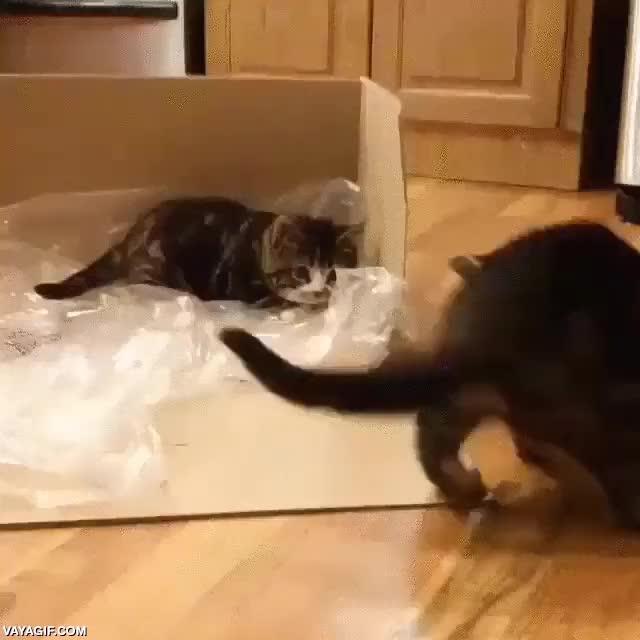 Enlace a Este es el ataque felino más desganado que he visto nunca