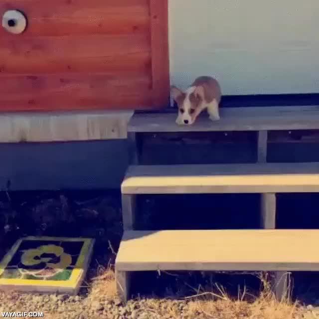 Enlace a Y así este cachorro de corgi aprendió que las escaleras es mejor bajarlas por el medio
