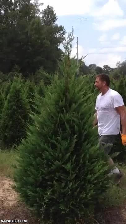 Enlace a El ninja de los árboles de Navidad