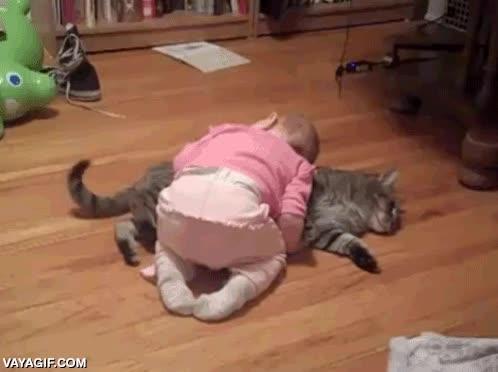 Enlace a Gatos, no hay animales más pacientes con los niños pequeños