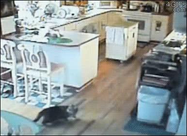 Enlace a El gato que sintió el terremoto antes de que ocurriera