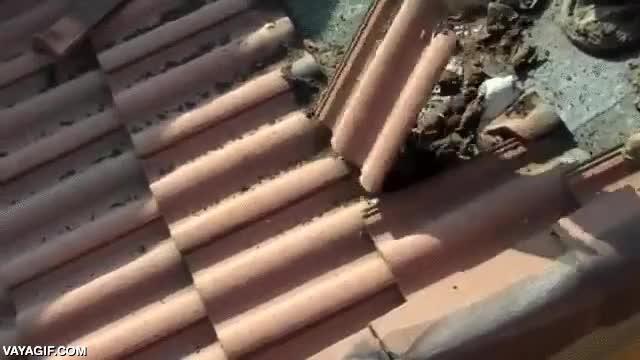 Enlace a ¿Nunca te has preguntado dónde están los murciélagos urbanos durante el día? Tal vez en tu tejado