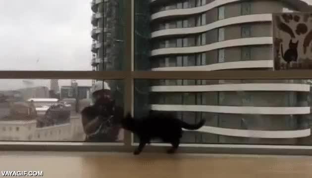 Enlace a El gatito que jugaba con los limpia-cristaleras