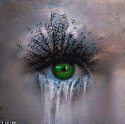 Enlace a La naturaleza vista a través de tus ojos