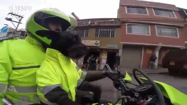 Enlace a Estos perros policía no dejan pasar la oportunidad de ir en moto