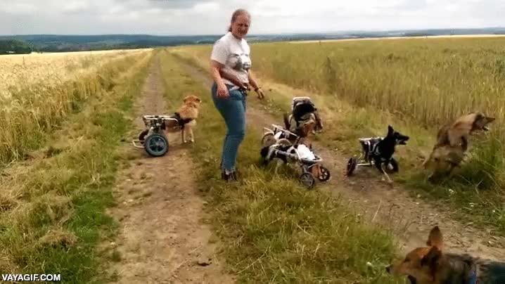 Enlace a Los perros no se preocupan ni se discriminan tengan el número de patas funcionales que tengan