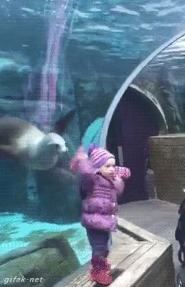 Enlace a Esta pequeña trollea sin querer a su amiga foca en el acuario