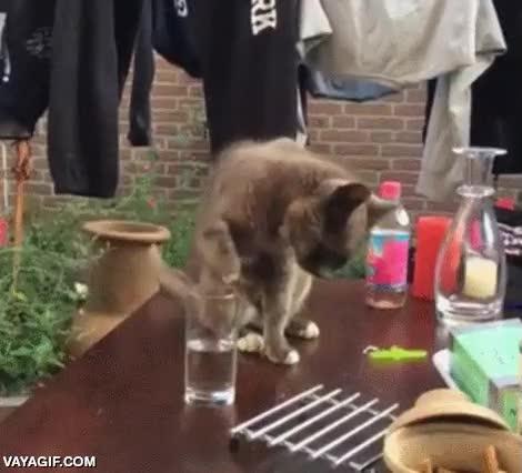 Enlace a Por su expresión, está claro que a este gato no le gusta que le trolleen