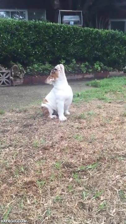 Enlace a El perrito que descubrió la lluvia por primera vez y no entendía nada