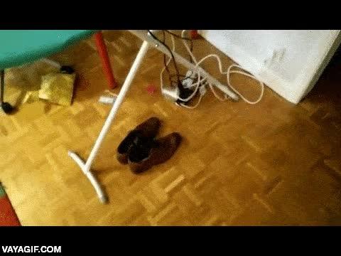 Enlace a ¿Un día de lluvia te ha empapado los zapatos pero no tienes tiempo para secarlos? Toma nota