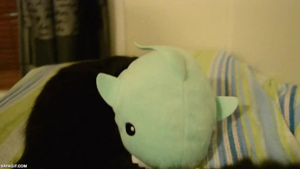 Enlace a ¿Puede ser adorable un tiburón? Si es de esta manera, sin duda