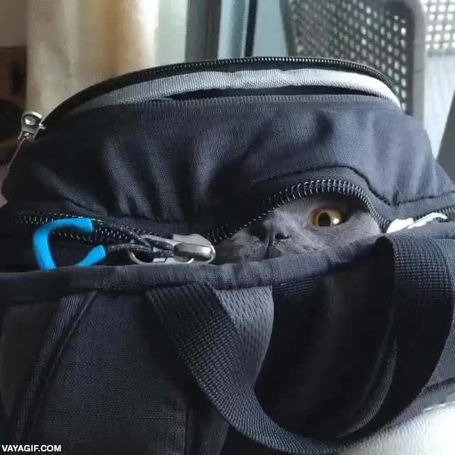 Enlace a El más grande ninja de mochila de todos los tiempos