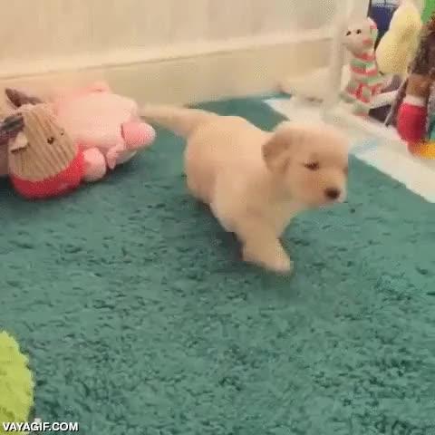 Enlace a ¡Va mami, no te enfades, porfi!