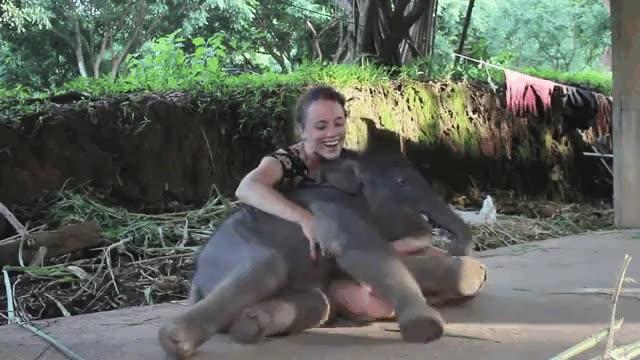 Enlace a El bebé elefante que quería cariñitos