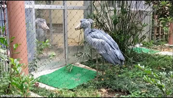 Enlace a Ojo que esta pelea entre pájaros se pone chunga de verdad