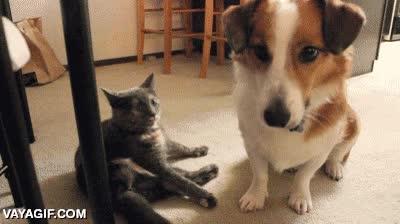Enlace a ¡Va tío, hazme caso, juega conmigo!