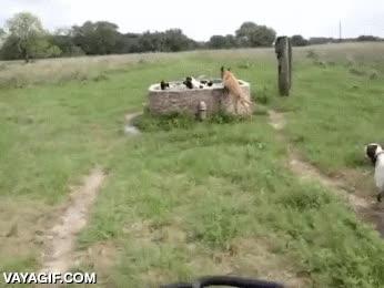 Enlace a Hay que ver lo mucho que les gusta el agua a los perros