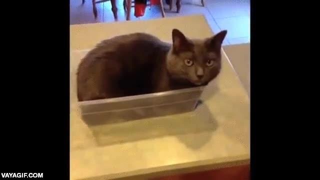 Enlace a Siempre he dicho que los gatos se teletransportan