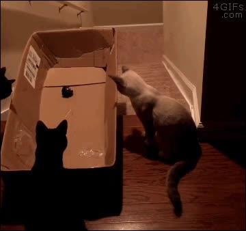 Enlace a Trampa para gatos