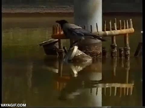 Enlace a Un cuervo utilizando patatas fritas de comida rápida para pescar