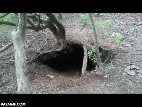 Enlace a Tú no lo sabías, pero los perros en estado natural viven bajo tierra