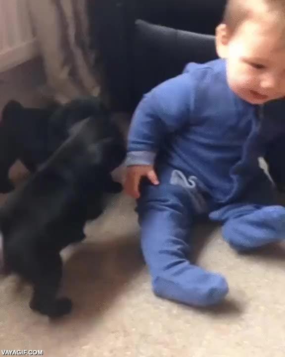 Enlace a Entre cachorros siempre se entienden