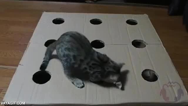 Enlace a Whack-A-Cat, como el juego de los topos pero mucho más adorable